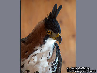 Worlds Center for Birds of Prey in Boise, Idaho.
