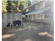Bear Den vacation rental property