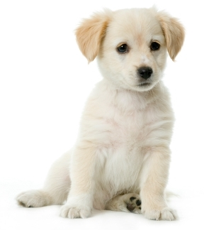 Pet Friendly places in Idaho
